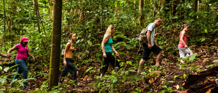 St Lucia Rainforest Walk